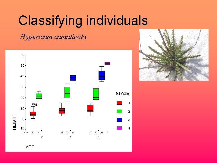 Classifying individuals Hypericum cumulicola