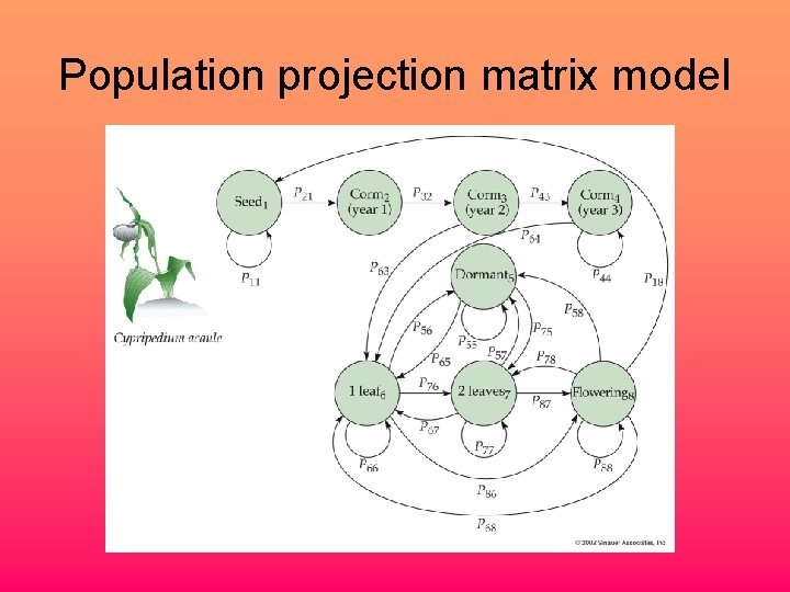 Population projection matrix model