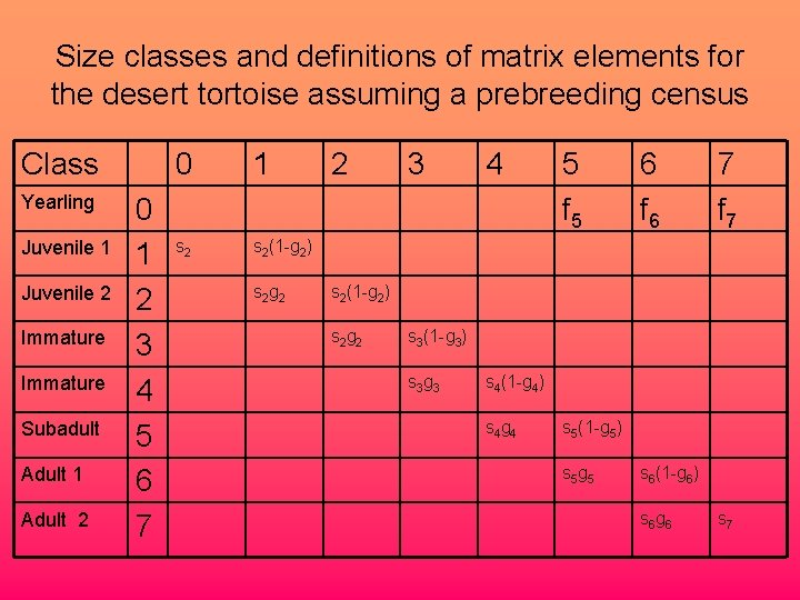 Size classes and definitions of matrix elements for the desert tortoise assuming a prebreeding