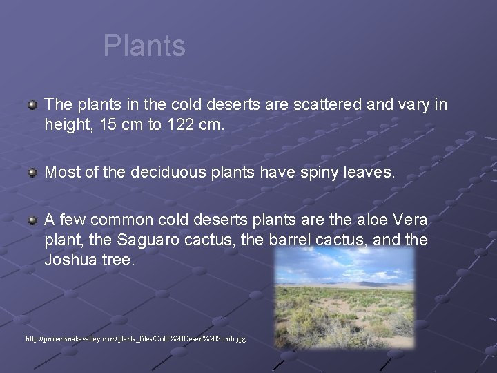 Plants The plants in the cold deserts are scattered and vary in height, 15