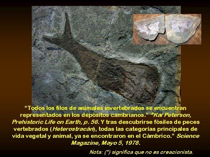 """""""Todos los filos de animales invertebrados se encuentran representados en los depósitos cambrianos. """""""