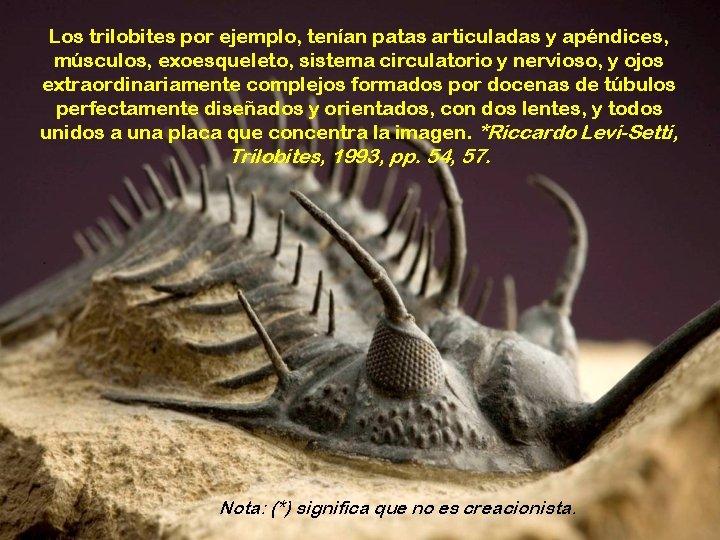 Los trilobites por ejemplo, tenían patas articuladas y apéndices, músculos, exoesqueleto, sistema circulatorio y