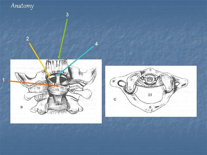 Anatomy 3 2 1 4