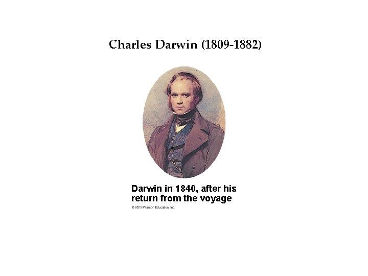 Darwin's Idea Charles Darwin. Big (1809 -1882) Darwin in 1840, after his return from