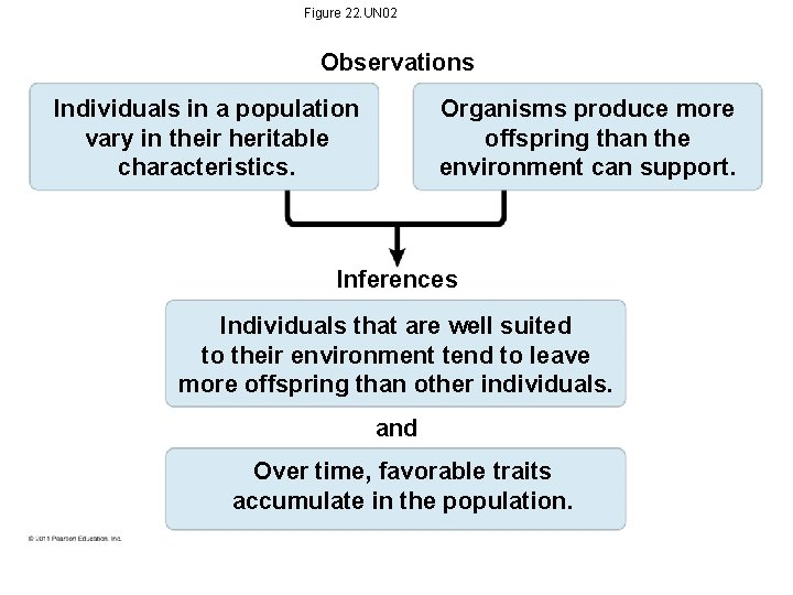 Figure 22. UN 02 Observations Individuals in a population vary in their heritable characteristics.