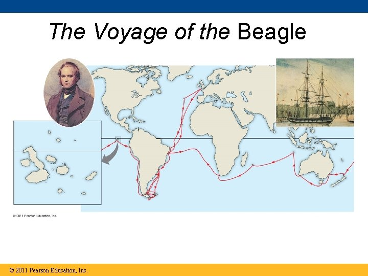 The Voyage of the Beagle © 2011 Pearson Education, Inc.