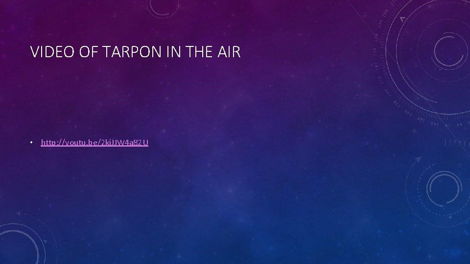 VIDEO OF TARPON IN THE AIR • http: //youtu. be/2 ki. JJW 4 a