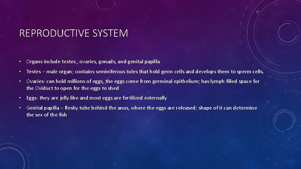 REPRODUCTIVE SYSTEM • Organs include testes , ovaries, gonads, and genital papilla • Testes