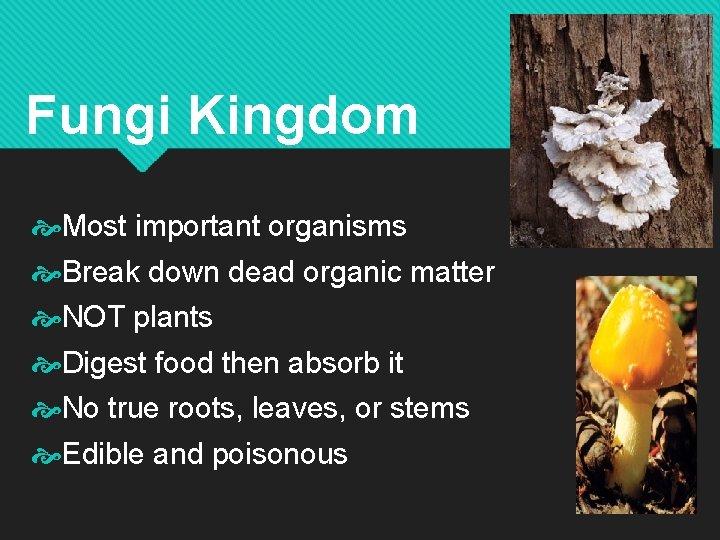 Fungi Kingdom Most important organisms Break down dead organic matter NOT plants Digest food
