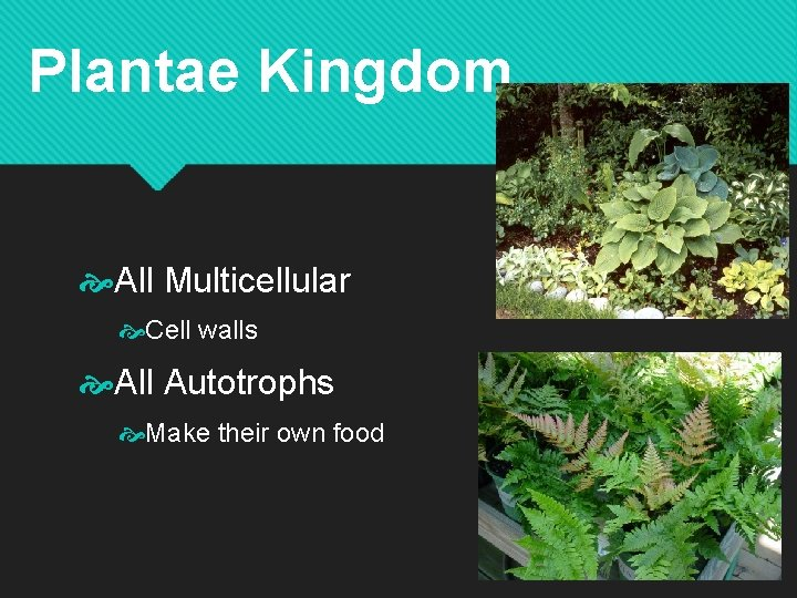 Plantae Kingdom All Multicellular Cell walls All Autotrophs Make their own food