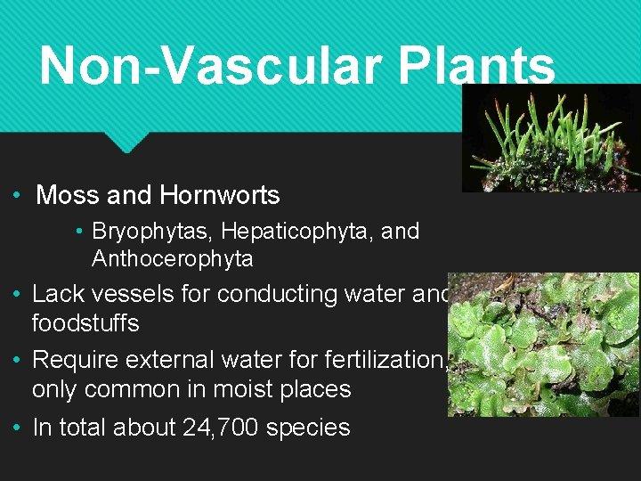 Non-Vascular Plants • Moss and Hornworts • Bryophytas, Hepaticophyta, and Anthocerophyta • Lack vessels