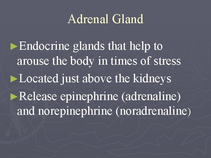Adrenal Gland ►Endocrine glands that help to arouse the body in times of stress