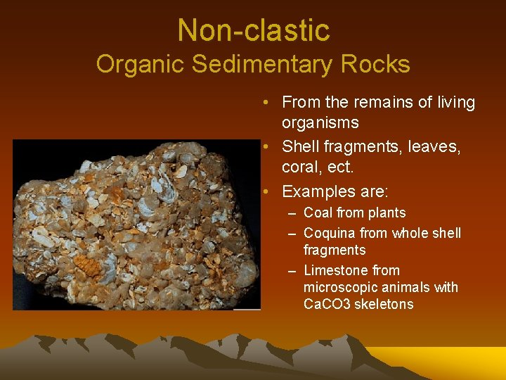 Non-clastic Organic Sedimentary Rocks • From the remains of living organisms • Shell fragments,