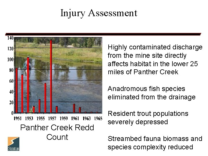 Injury Assessment Highly contaminated discharge from the mine site directly affects habitat in the