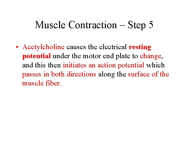 Muscle Contraction – Step 5 • Acetylcholine causes the electrical resting potential under the