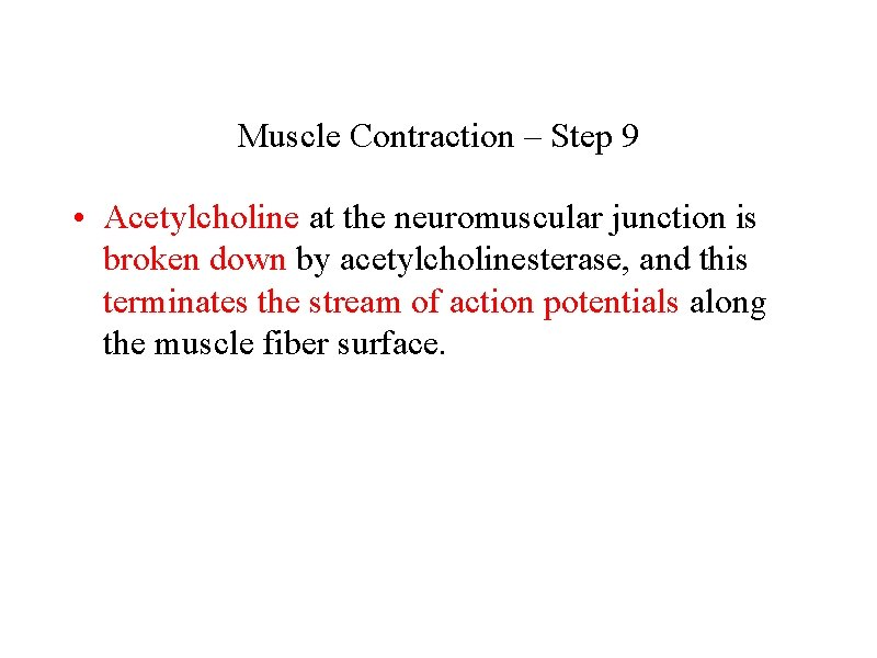 Muscle Contraction – Step 9 • Acetylcholine at the neuromuscular junction is broken down