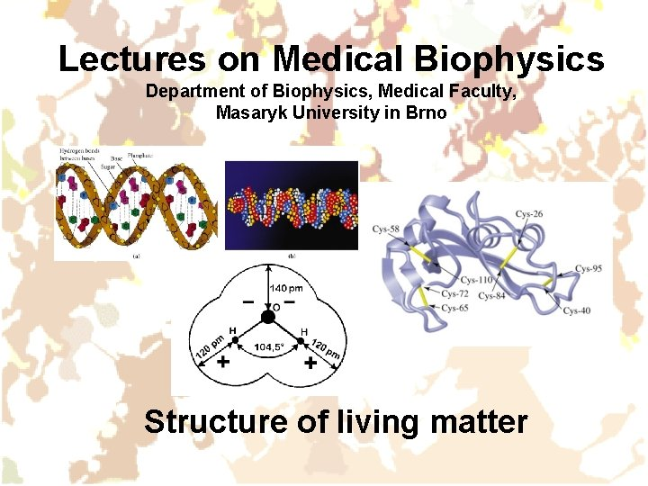 Lectures on Medical Biophysics Department of Biophysics, Medical Faculty, Masaryk University in Brno Structure
