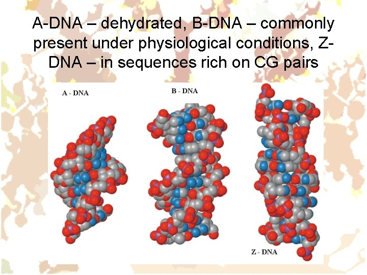 A-DNA – dehydrated, B-DNA – commonly present under physiological conditions, ZDNA – in sequences