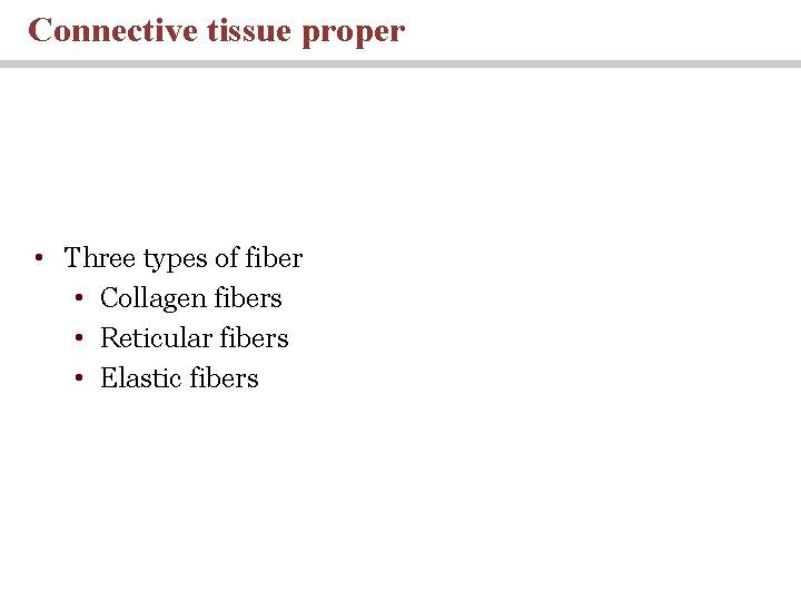 Connective tissue proper • Three types of fiber • Collagen fibers • Reticular fibers