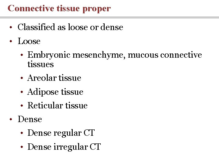 Connective tissue proper • Classified as loose or dense • Loose • Embryonic mesenchyme,