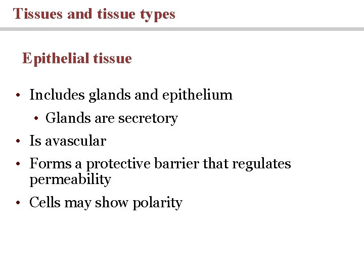 Tissues and tissue types Epithelial tissue • Includes glands and epithelium • Glands are
