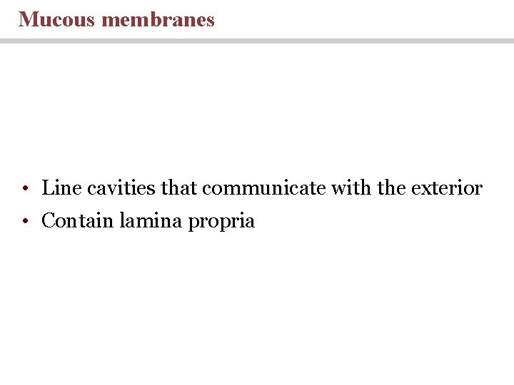 Mucous membranes • Line cavities that communicate with the exterior • Contain lamina propria