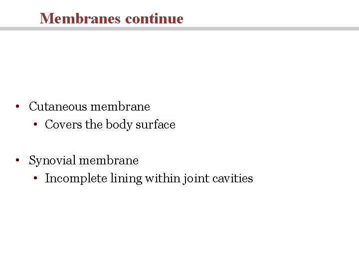 Membranes continue • Cutaneous membrane • Covers the body surface • Synovial membrane •