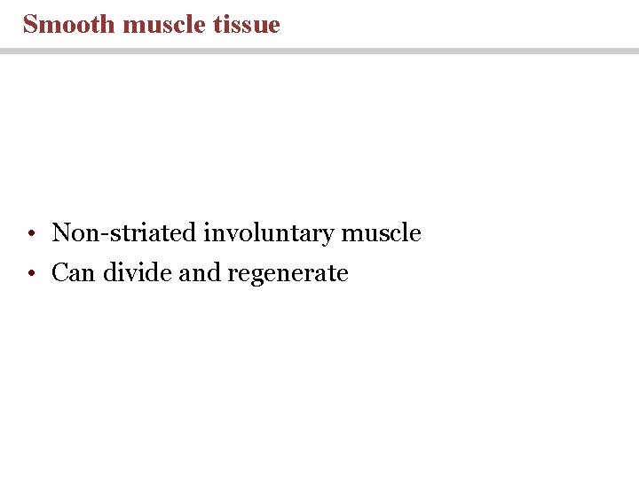 Smooth muscle tissue • Non-striated involuntary muscle • Can divide and regenerate