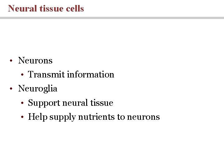 Neural tissue cells • Neurons • Transmit information • Neuroglia • Support neural tissue