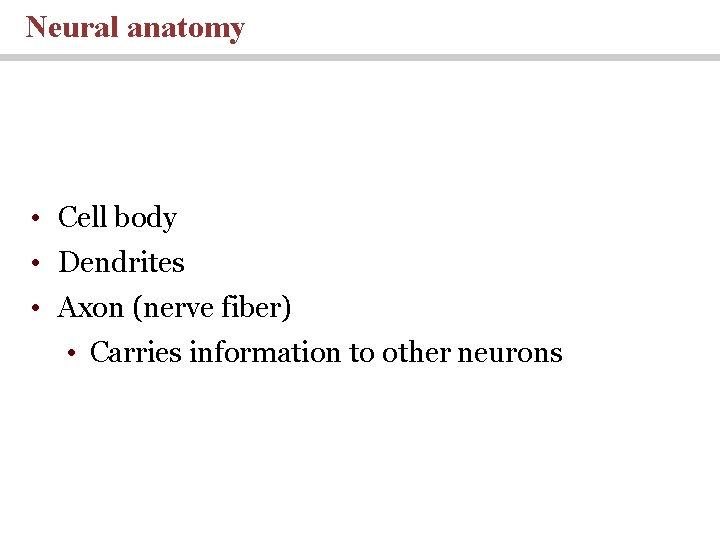 Neural anatomy • Cell body • Dendrites • Axon (nerve fiber) • Carries information