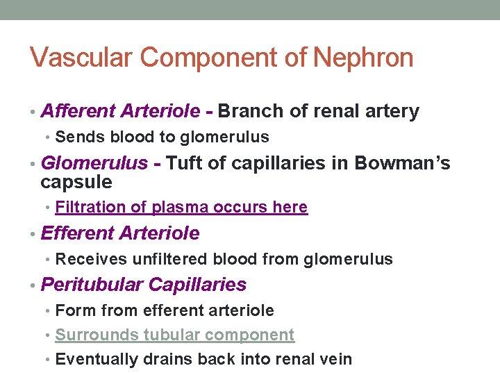 Vascular Component of Nephron • Afferent Arteriole - Branch of renal artery • Sends