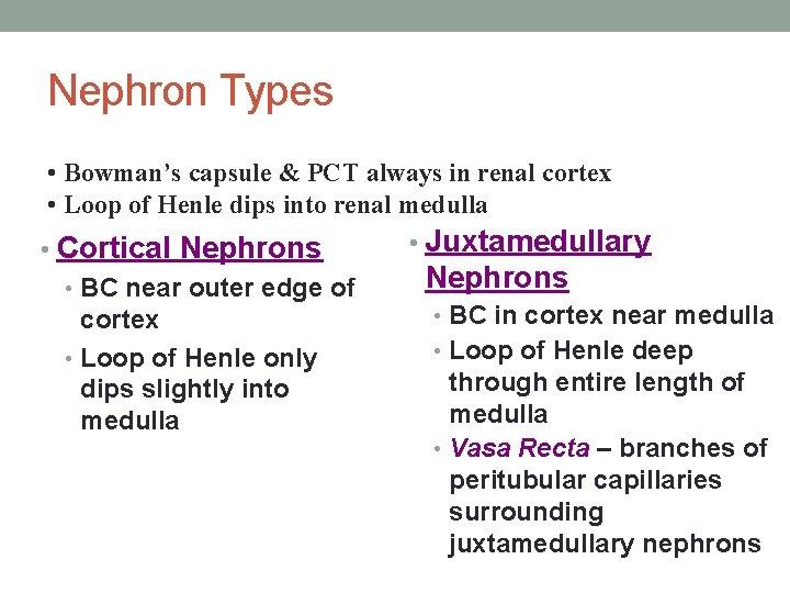 Nephron Types • Bowman's capsule & PCT always in renal cortex • Loop of