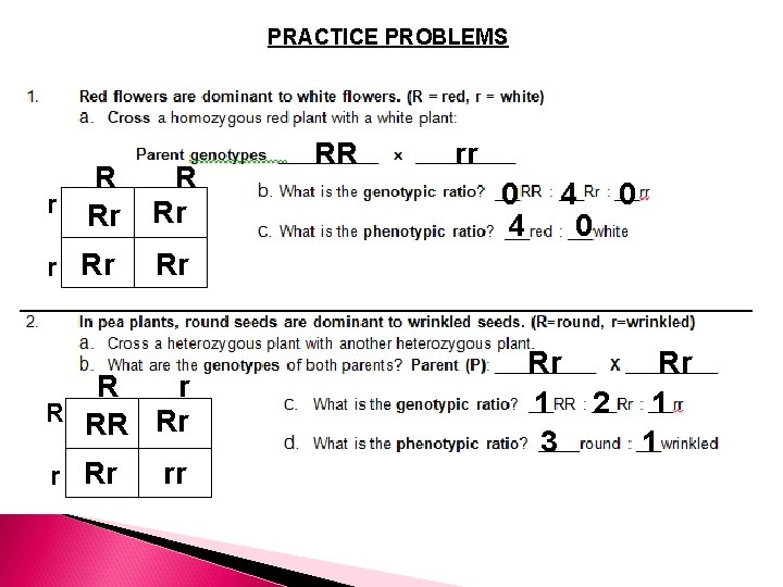PRACTICE PROBLEMS R R r Rr Rr rr 0 4 0 Rr R r