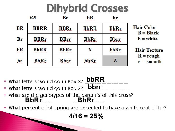 Dihybrid Crosses bb. RR What letters would go in Box X? _________ bbrr What