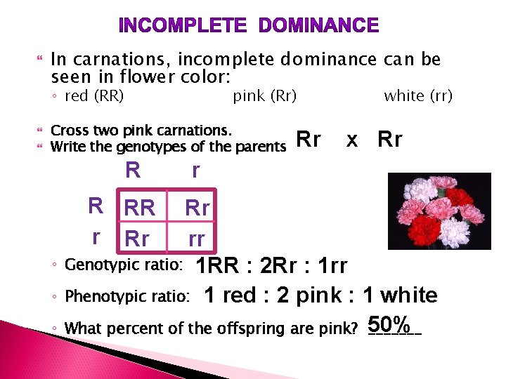 In carnations, incomplete dominance can be seen in flower color: ◦ red (RR)