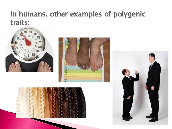 In humans, other examples of polygenic traits: