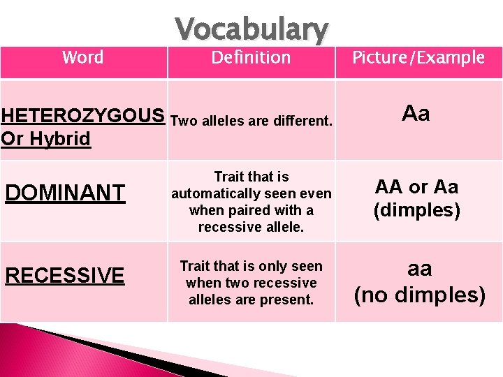 Word Vocabulary Definition HETEROZYGOUS Two alleles are different. Or Hybrid DOMINANT RECESSIVE Picture/Example Aa