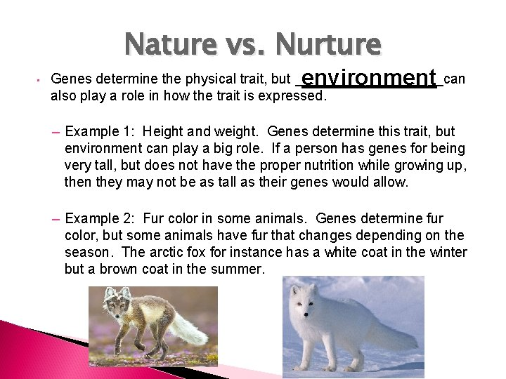 Nature vs. Nurture • environment Genes determine the physical trait, but __________can also play