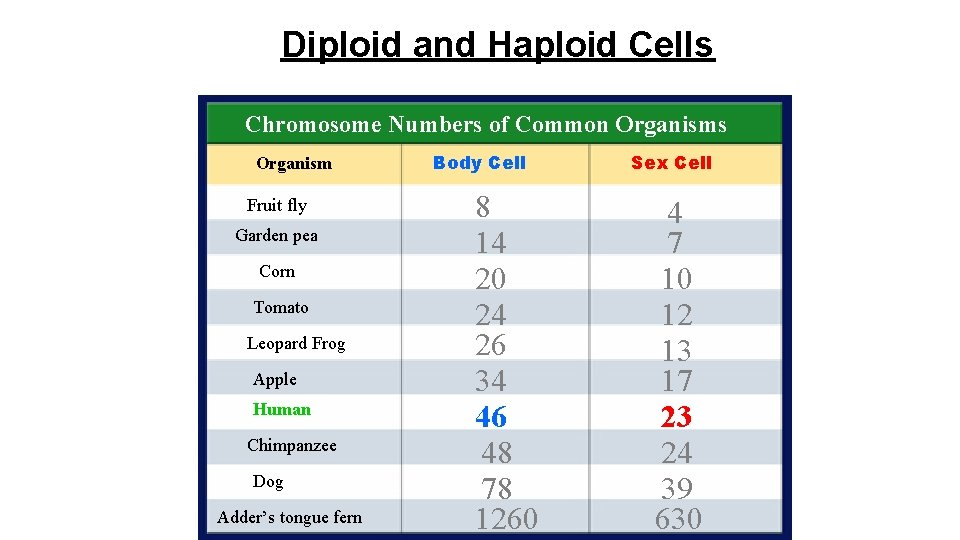 Diploid and Haploid Cells Chromosome Numbers of Common Organisms Organism Fruit fly Garden pea