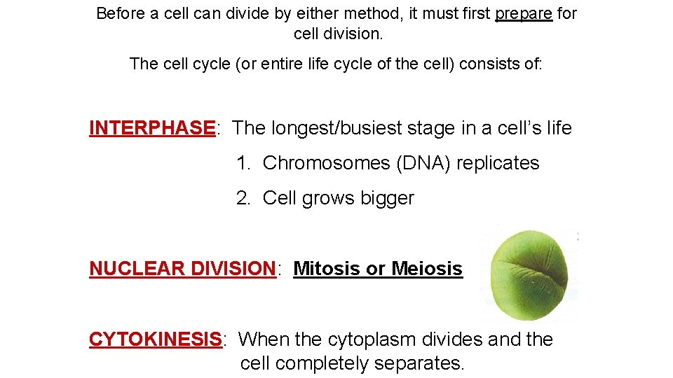 Before a cell can divide by either method, it must first prepare for cell