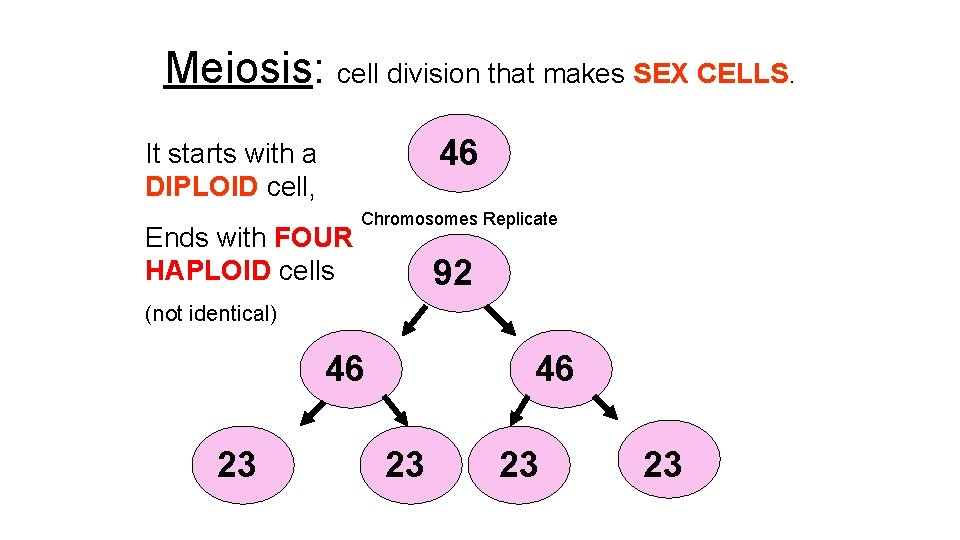 Meiosis: cell division that makes SEX CELLS. 46 It starts with a DIPLOID cell,