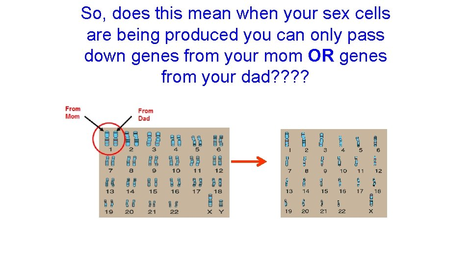 So, does this mean when your sex cells are being produced you can only