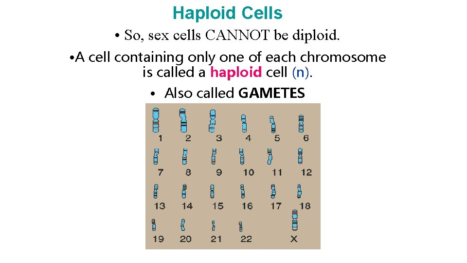 Haploid Cells • So, sex cells CANNOT be diploid. • A cell containing only