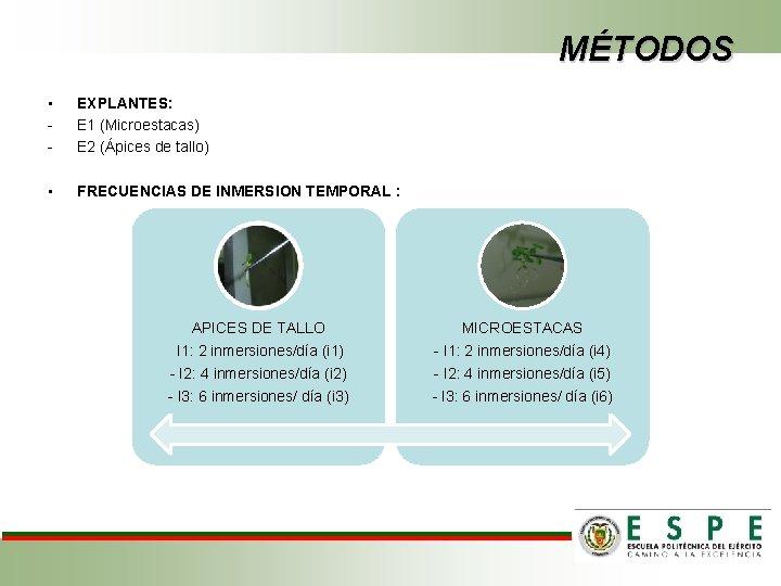 MÉTODOS • - EXPLANTES: E 1 (Microestacas) E 2 (Ápices de tallo) • FRECUENCIAS