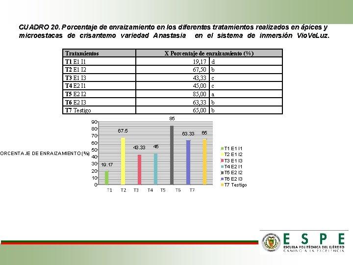 CUADRO 20. Porcentaje de enraizamiento en los diferentes tratamientos realizados en ápices y microestacas