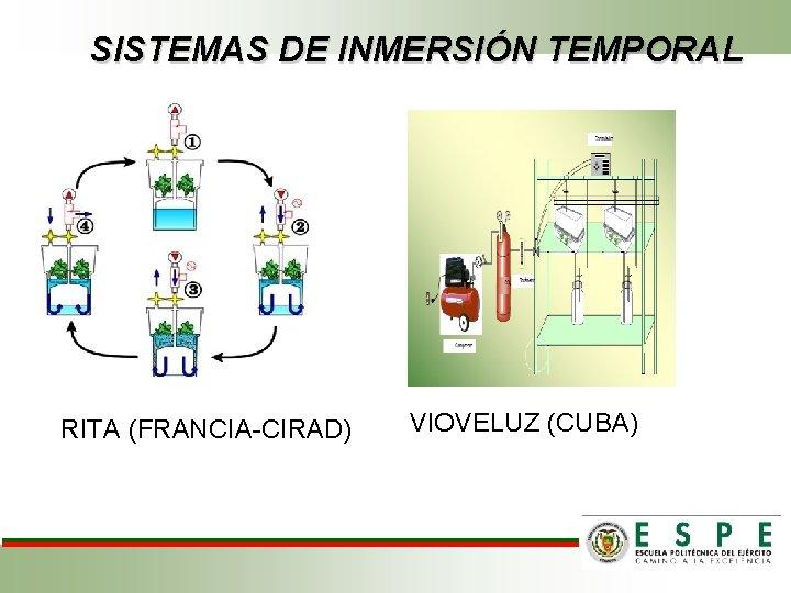 SISTEMAS DE INMERSIÓN TEMPORAL RITA (FRANCIA-CIRAD) VIOVELUZ (CUBA)