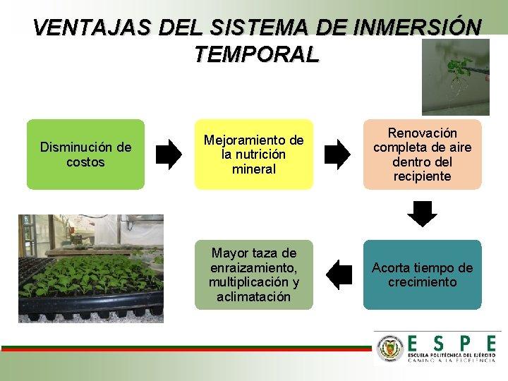 VENTAJAS DEL SISTEMA DE INMERSIÓN TEMPORAL Disminución de costos Mejoramiento de la nutrición mineral