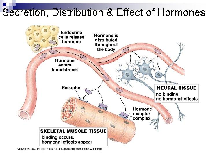 Secretion, Distribution & Effect of Hormones
