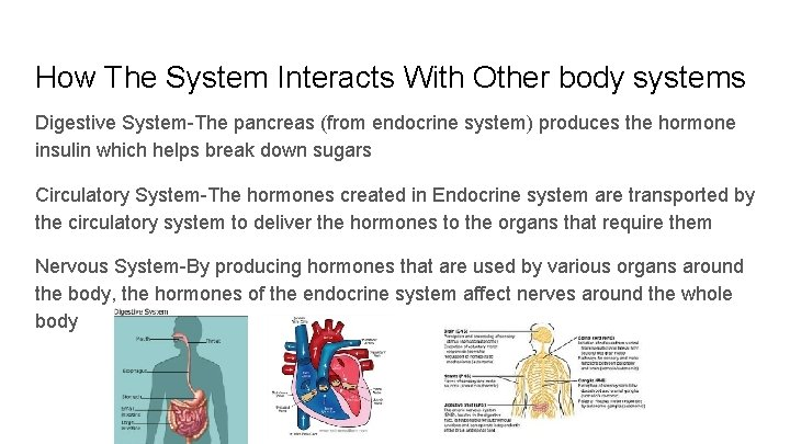 How The System Interacts With Other body systems Digestive System-The pancreas (from endocrine system)