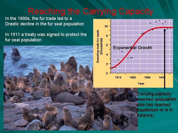 Reaching the Carrying Capacity In the 1800 s, the fur trade led to a